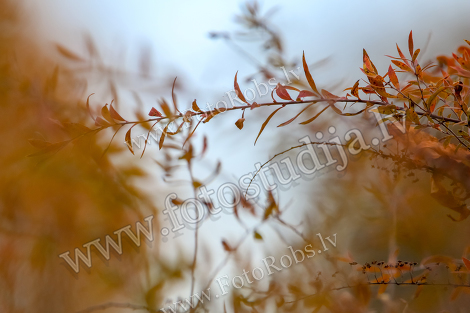 Bush branches in autumn