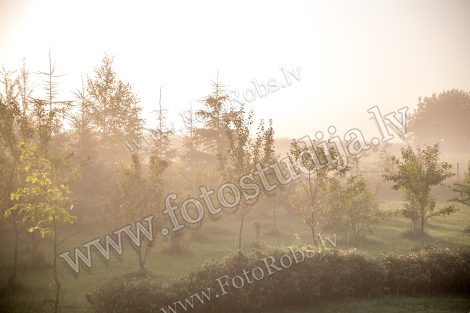 Mist in fruit garden;