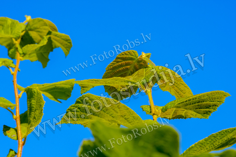 Green leaves against blue skies